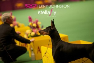 136th Annual Westminster Kennel Club